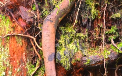 Photo evidence that trees have arms!