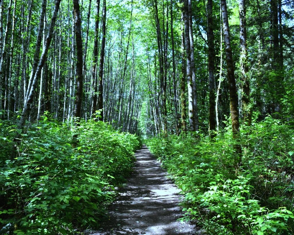 Spirit park path and aldergrove