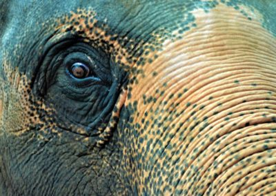Looking into the eye of an elephant  is a bit scarey and proof  that  they are an intelligent animal